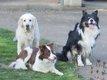 Vacances  Absences  Que faire de votre chien