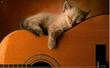 Privé-gitaarles ( Merksem )