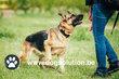 Coach canin Brabant Wallon - éducateur canin -...