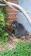 Garde petits animaux - 2 jardins - vacances...