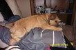 Pension pour chien  Comme à la maison