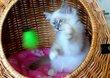 4 adorable chatons
