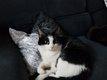 Lira et Abby chattes stérilisées à donner