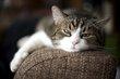 Cat - Sitting