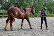 Cours Horsemanship & Performance