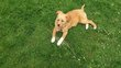 Misty jeune chienne a adopter
