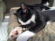 Nougat & Nala - chatons - spa la louviere (FA)