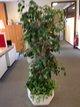 Plantes vertes artificielles pour votre intérieur