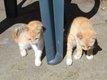 2 chatons et une maman roux à donner