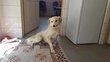 Leeloo à adopter