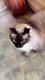 Chats à donner (stérilisée)