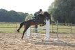Merry Horse (Rhode st-genèse) Jument Complet