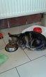Chat femelle de 2 ans à donner