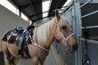 Quarter-horse à 10 min de Waterloo
