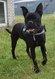 Spa de stembert: Lina x cane corso 4 ans