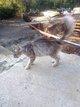 Jeune chat très câlin à donner