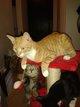 Jeune chat de 8 mois à donner