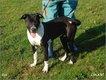 Lola femelle croisé Dalmatienne de 8 mois.
