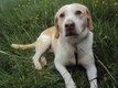 Max mâle croisé Beagle de 8 ans.