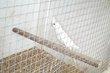 Calo (albino, à face blanche, .), kakariki,...