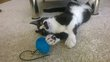 Le Cat Sitting ou les visites pour Chat à votre...