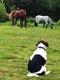 Dogsitting/Catsitting/horsesitting>...