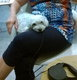 Garderie pour chiens à vaux sous Chèvremont