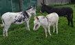 3 ânes