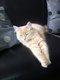 2 chats à donner contre bons soins (1 femelle, 1...