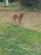 Boxer 5 ans