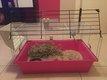 Cage rongeurs 50cm casi neuve