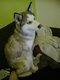 2 chiots husky de 9 mois