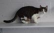 Spa stembert: Loras chaton 9 mois
