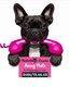 Amay'Poils - Toilettage canin - Diplômée depuis...