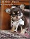 Chiots Chihuahua - Eleveur Familial