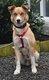 Spa stembert: Django x husky 1,5 an