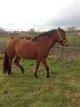 Chouette poney crusado