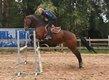 Plusieurs chevaux et poneys cherchent leur nouvel...
