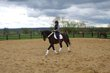 Jument KWPN dressage - jumping - complet
