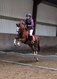 Top poney toutes disciplines