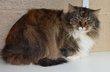 Spa Verviers: Georgette 2 ans [cherche] une...