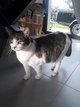 Gaïa chat femelle à donner