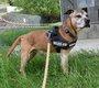 Spa Verviers: Tyson am staff 13,5 ans