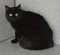 Spa Verviers: Elsa chatte noire 1 an [cherche]...