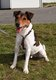 Spa Verviers: Canaillou jack russell 8 ans