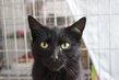 Pepsi - chat noir - spa la louviere