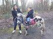 Super poney pour les enfants appaloosa dalmatien