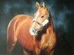 Jeune cheval sbs 5 ans par trésor de virton