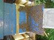 Des ruches dadant 12 cadres peuplees d abeilles...