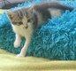 Disponibles -Superbes chatons croisés...